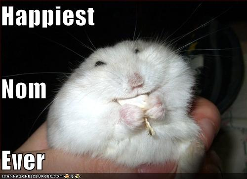 Funny_pictures_hamster_has_the_happiest_nom_ever_HAHA_WTF-s500x363-112960-580.jpg